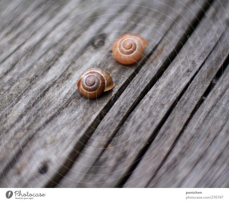 Mensch Tier Holz liegen Tierpaar Schnecke verwittert Hülle Schneckenhaus