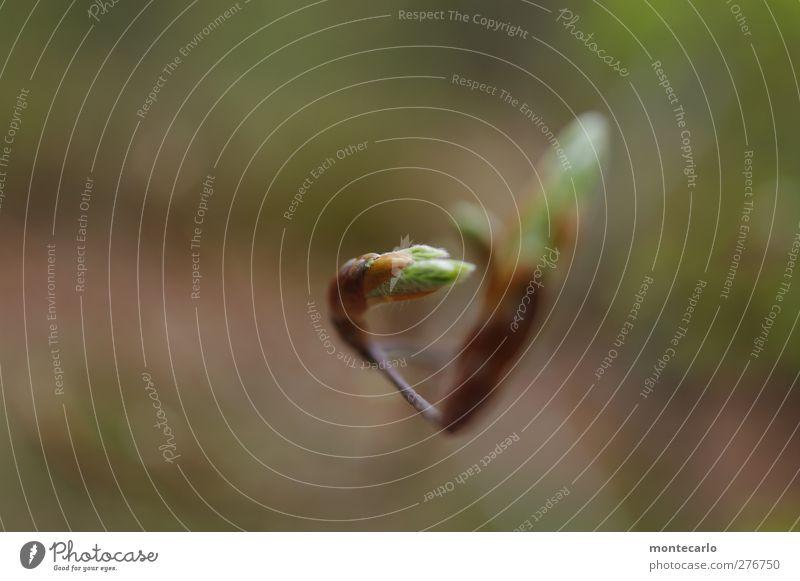 Jungfräulich Natur Baum Pflanze Blatt Wald Umwelt Frühling klein natürlich wild elegant frisch authentisch ästhetisch Schönes Wetter Spitze