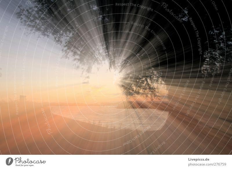 Sonnenlicht an der Müritz Umwelt Natur Landschaft Wasser Himmel Sonnenaufgang Sonnenuntergang Sommer Schönes Wetter Pflanze Baum Gras Sträucher Blatt