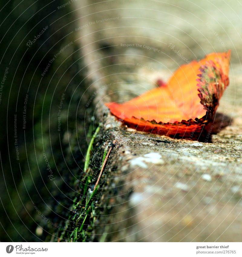 Das Blatt auf dem Sprung Frühling Sommer mehrfarbig gelb gold ruhig Herbst Mauer Gras Moos Stein Beton liegen nah Farbfoto Außenaufnahme Menschenleer