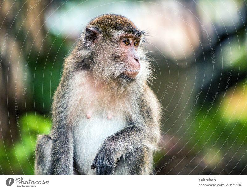 gelassenheit Ferien & Urlaub & Reisen Natur schön Tier Ferne Auge Tourismus außergewöhnlich Freiheit Ausflug nachdenklich Wildtier Abenteuer fantastisch Asien