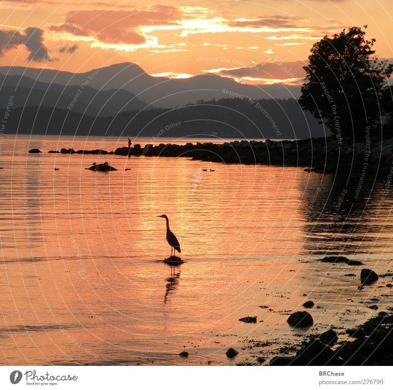 Himmel Natur Wasser schön Baum Sommer Meer Freude Tier Wolken schwarz Landschaft Berge u. Gebirge Küste Erde Vogel