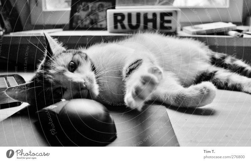 ab jetzt ist Ruhe Katze Tier Kraft Tastatur Haustier