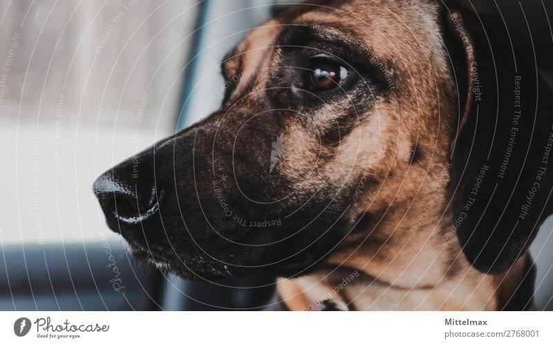 Rhodesian Ridgeback Dog being the best Co Pilot one can have Lifestyle Freude sportlich Fitness Leben Erholung Freizeit & Hobby Ferien & Urlaub & Reisen