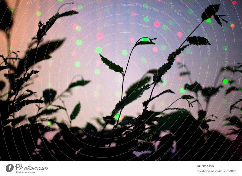 Disco bei Käfer Carl Nachtleben Veranstaltung Club Strandbar Lounge ausgehen Feste & Feiern clubbing Kunst Natur leuchten Tanzen ästhetisch dunkel einzigartig