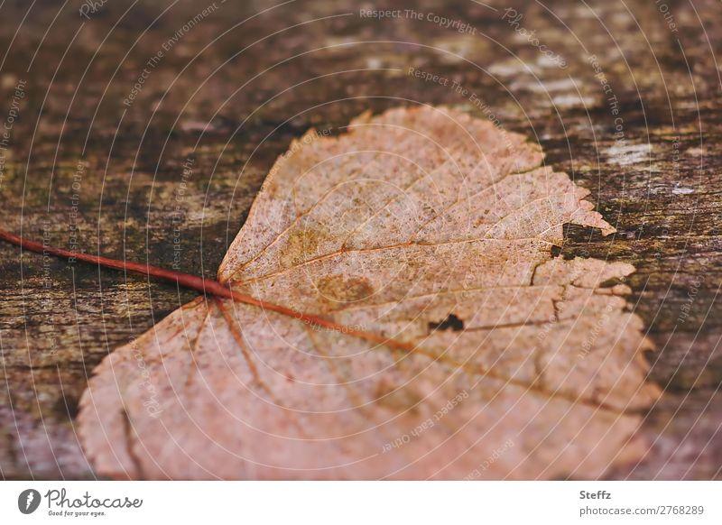 verwittert Umwelt Natur Pflanze Herbst Klimawandel Wetter Blatt Herbstlaub Blattadern Holz alt natürlich schön braun Stimmung Herbstgefühle Traurigkeit Verfall