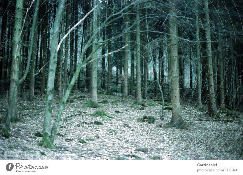 Mischwald Umwelt Natur Pflanze Baum Wald dunkel grün Waldboden Waldrand Nadelbaum Farbfoto Gedeckte Farben