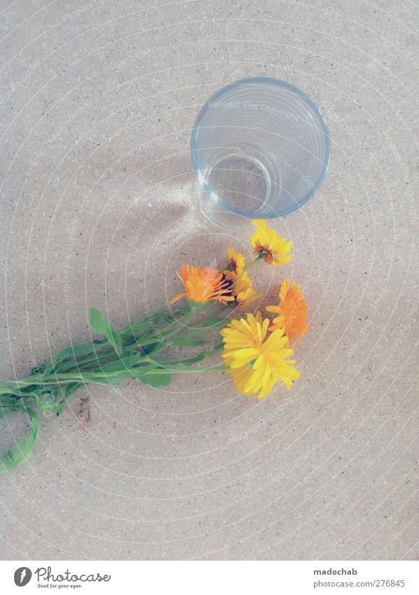 I'm not your heartbreaker Lifestyle elegant Stil Häusliches Leben Pflanze Blume Blüte Zeichen Traurigkeit Sorge Liebeskummer Unlust Frustration Armut