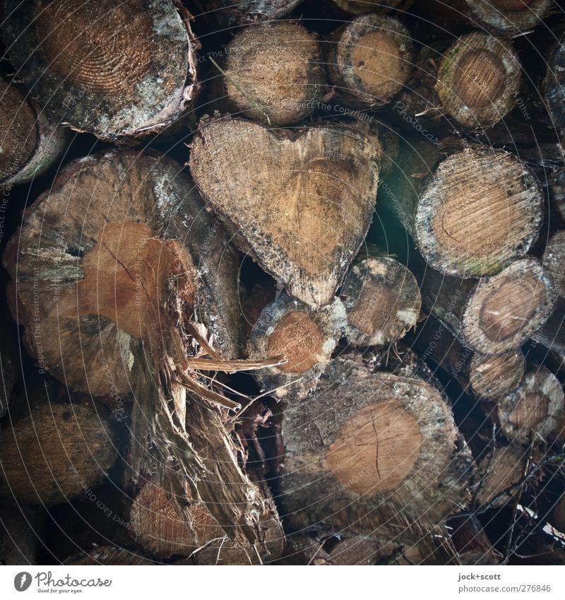 Herz in der Natur Holz Glück Romantik Inspiration Wachstum Holzstapel Rohstoffe & Kraftstoffe gesplittert Lager Baumstamm Maserung Phantasie Detailaufnahme