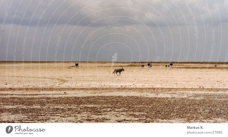 Etosha Pfanne Etoscha-Pfanne Park Salzsee trocken Spießbock Antilopen Physik Namibia München Saline Wasser Wärme Appetit & Hunger Durst
