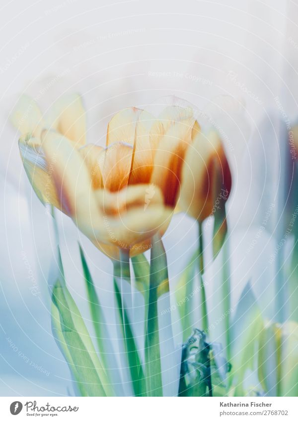 Tulpen Blumen gelb grün malerisch Kunst Kunstwerk Natur Pflanze Frühling Sommer Herbst Winter Blatt Blüte Blumenstrauß Blühend leuchten blau türkis weiß