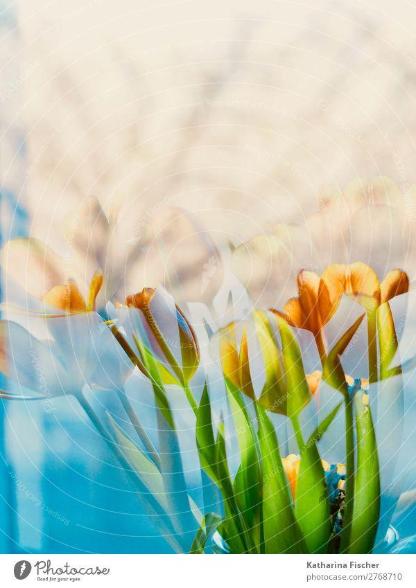 Blumenstrauß malerisch Kunst Natur Pflanze Frühling Sommer Herbst Winter Tulpe Efeu Farn Blatt Blüte Blühend leuchten gelb gold grün orange türkis weiß