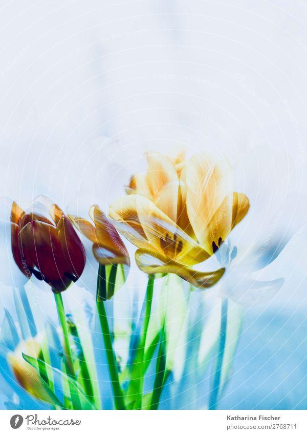 Tulpen Blumen malerisch Kunst Kunstwerk Natur Pflanze Frühling Sommer Herbst Winter Blatt Blüte Blumenstrauß Blühend leuchten blau mehrfarbig gelb gold grün