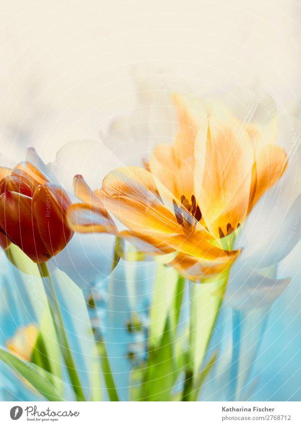 *300* Kunst Natur Pflanze Frühling Sommer Herbst Winter Tulpe Blatt Blüte Blumenstrauß Blühend leuchten gelb gold grün orange rosa rot türkis weiß