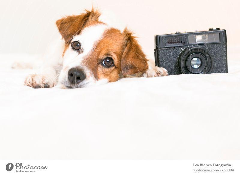 Hund schön weiß Haus Tier schwarz Lifestyle lustig klein Textfreiraum braun Freundschaft Freizeit & Hobby liegen Fröhlichkeit genießen