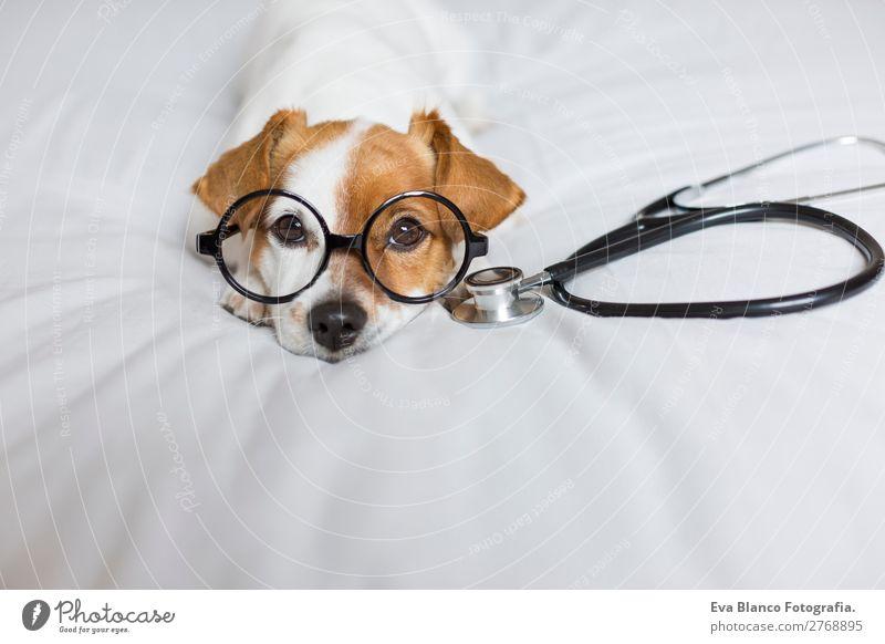 Porträt eines süßen Doktorhundes, der auf dem Bett sitzt. Lifestyle Gesundheit Gesundheitswesen Behandlung Krankenpflege Medikament Freizeit & Hobby Haus Raum