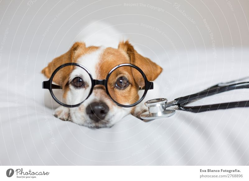 Hund schön weiß Tier Gesundheit Lifestyle lustig Gesundheitswesen klein braun Freundschaft Freizeit & Hobby Raum sitzen stehen einzigartig