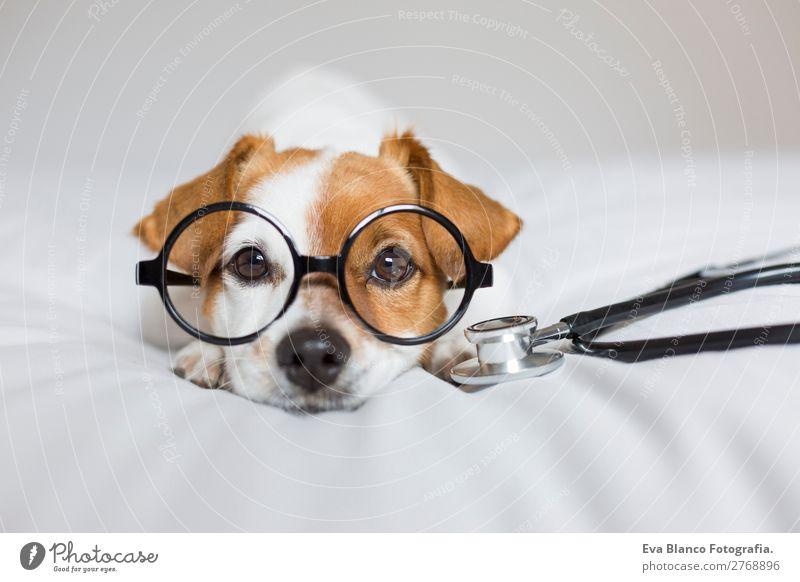 Porträt eines süßen Doktorhundes, der auf dem Bett sitzt. Lifestyle Gesundheit Gesundheitswesen Behandlung Krankenpflege Krankheit Medikament Freizeit & Hobby