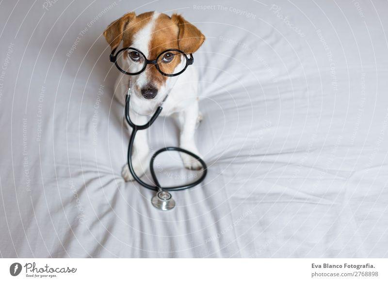 Porträt eines süßen Doktorhundes, der auf dem Bett sitzt. Gesundheit Gesundheitswesen Behandlung Krankenpflege Krankheit Medikament Freizeit & Hobby Beruf Arzt