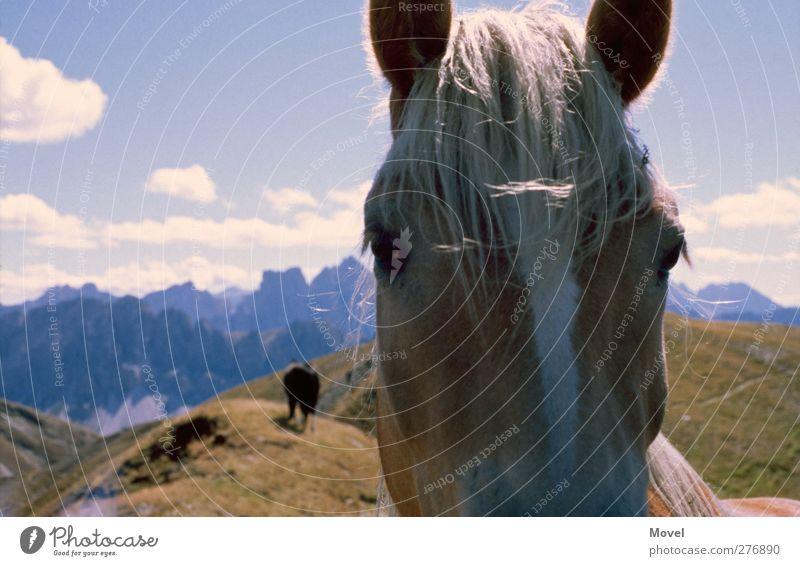 The italian horse Himmel Ferien & Urlaub & Reisen Sommer Tier Wolken Landschaft Wiese Berge u. Gebirge Wege & Pfade Horizont Wildtier wandern Alpen Pferd