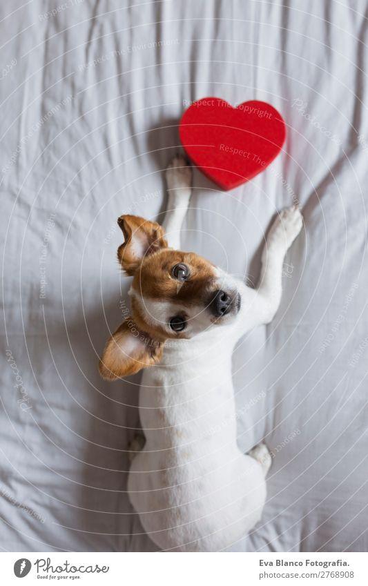 Hund schön weiß rot Haus Tier Lifestyle Holz Liebe lustig Glück Feste & Feiern klein braun oben Freizeit & Hobby