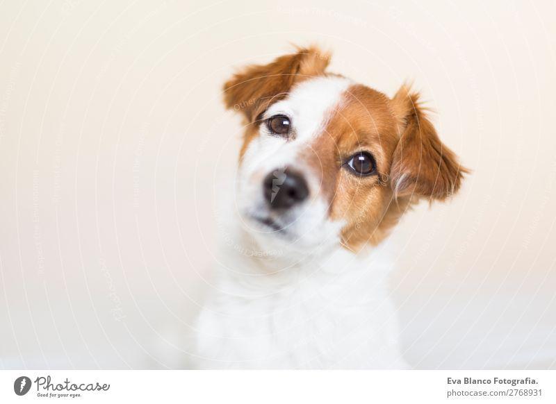 Porträt eines süßen Hundes, der auf dem Bett liegt. Lifestyle Freizeit & Hobby Wohnung Haus Raum Tier Haustier 1 beobachten Blick sitzen Freundlichkeit schön