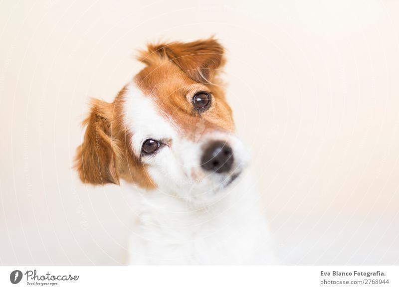 Porträt eines süßen Hundes auf dem Bett Lifestyle Freizeit & Hobby Häusliches Leben Haus Tier Haustier 1 beobachten Blick schlafen sitzen kuschlig natürlich