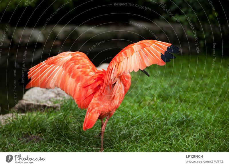 """""""Geduldete"""" Migration Ferien & Urlaub & Reisen Sommer Tier Wildtier Vogel Flügel 1 füttern ästhetisch exotisch Ferne schön rot Farbfoto Außenaufnahme"""