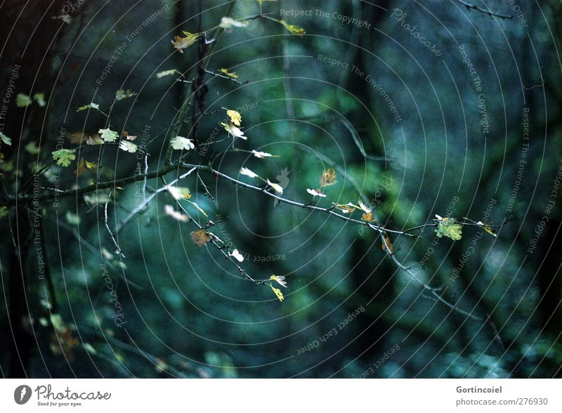 Licht im Dunkel Natur grün Baum Pflanze Blatt Wald Umwelt dunkel Sträucher Zweig Laubbaum