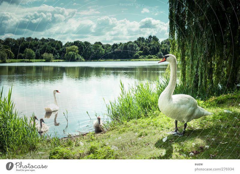 Cheffe hat alles im Blick* Himmel Natur Wasser grün schön Sommer Tier Wolken Landschaft Umwelt Wiese See Vogel außergewöhnlich Wildtier Schönes Wetter