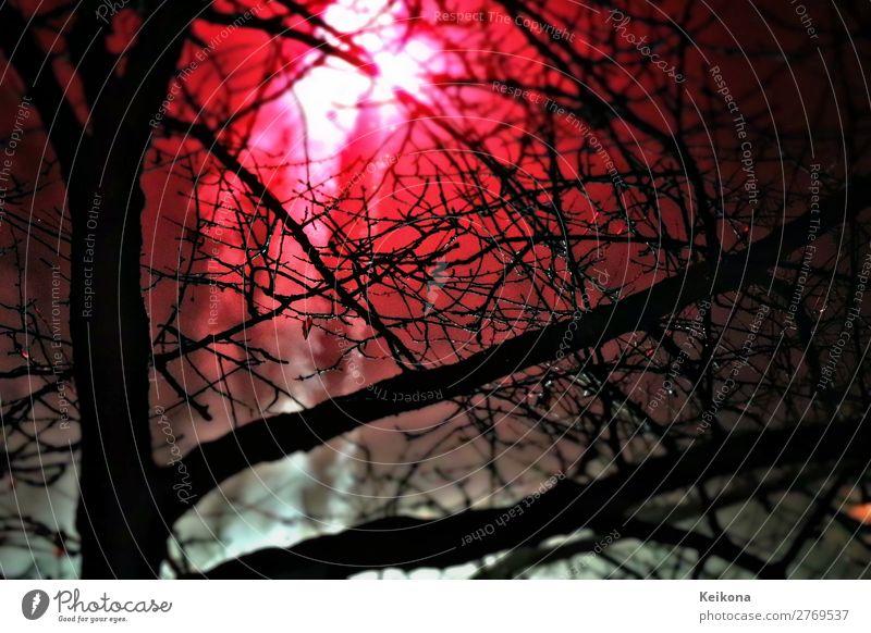 Silverster Feuerwerk im Wald Freude Spielen Abenteuer Winter Party Veranstaltung Feste & Feiern Silvester u. Neujahr Jahrmarkt Show Baum Rauch dunkel glänzend