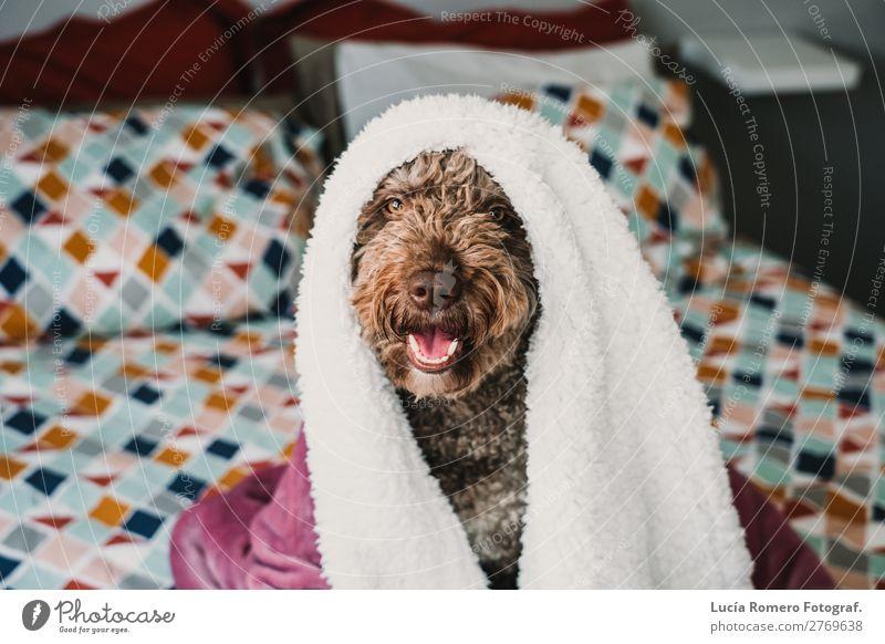 Freundlicher Hund auf dem Bett liegend, bedeckt mit einer rosa Decke. Lifestyle Freude schön Erholung Schlafzimmer Freundschaft Tier Haustier Liebe