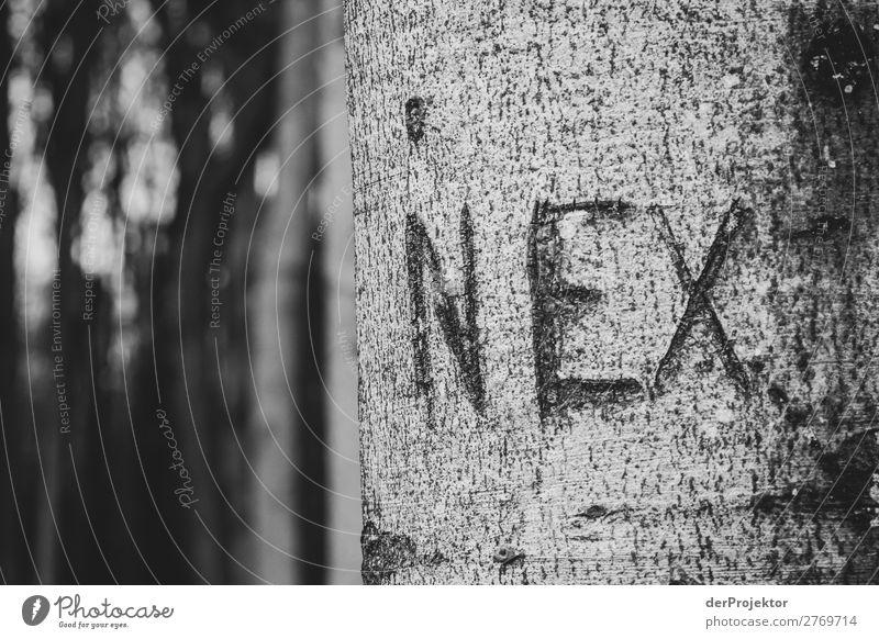 Gespensterwald in Nienhagen X Zentralperspektive Kontrast Licht Tag Textfreiraum Mitte Textfreiraum unten Textfreiraum links Textfreiraum rechts