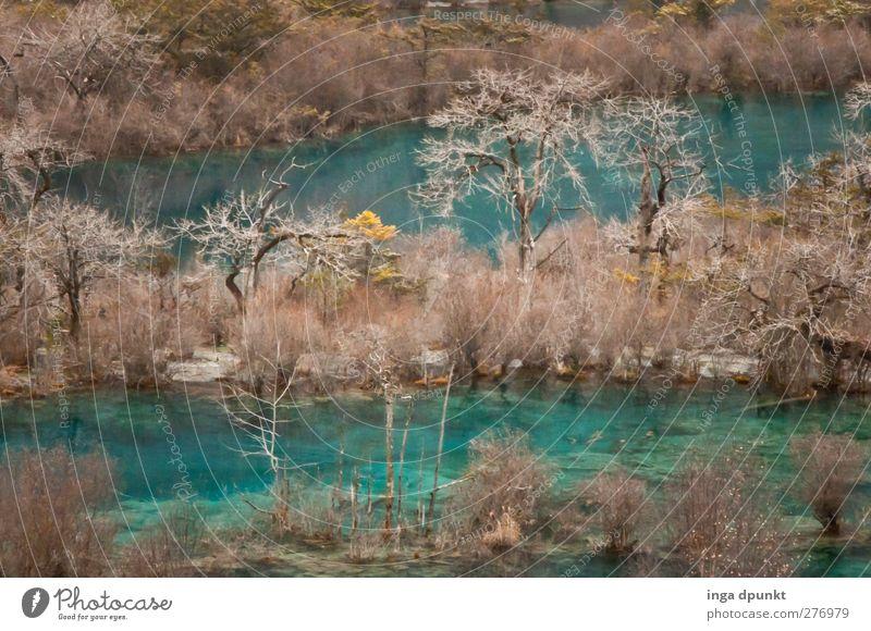 klare Seen Natur blau Baum Pflanze Winter Wald Landschaft Umwelt kalt außergewöhnlich Reisefotografie Tourismus Abenteuer Seeufer rein fantastisch