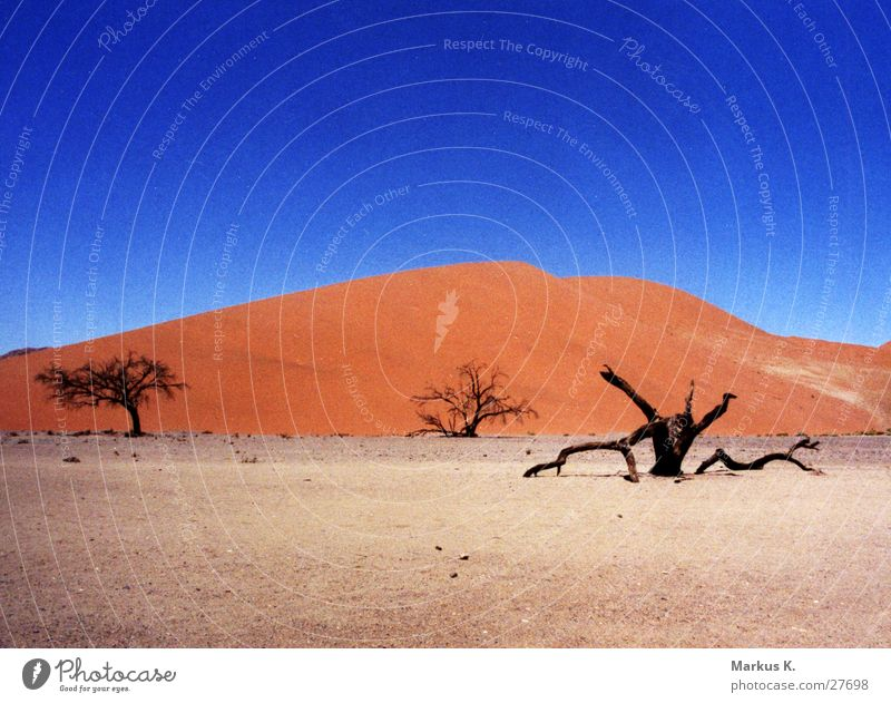 Düne 45 (2) Baum blau rot Tod Wärme Sand Afrika Wüste München Physik heiß trocken Stranddüne Durst getrocknet matt