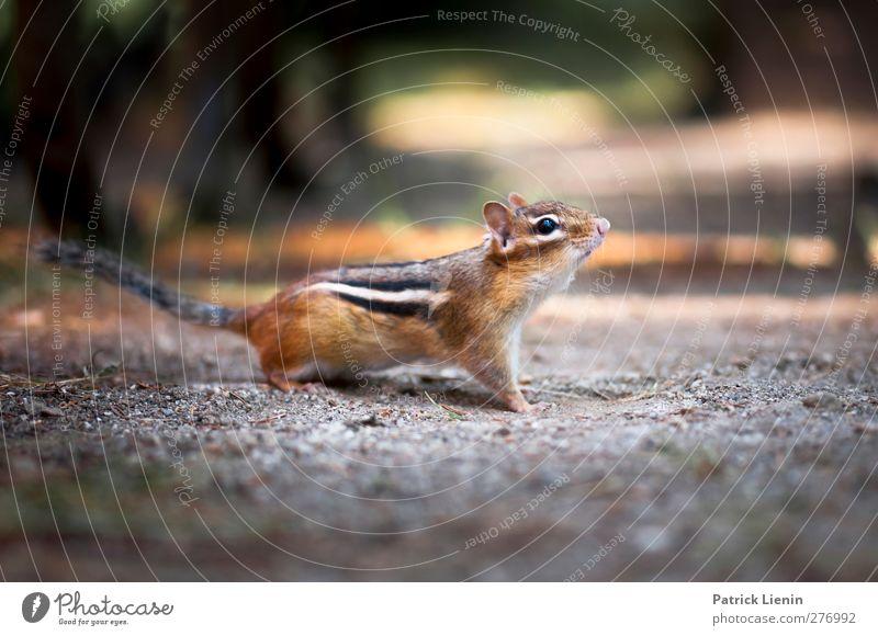 My Friend Chippy Natur schön Freude Tier Wald Umwelt Freiheit Erde Wildtier ästhetisch Neugier USA Momentaufnahme Fressen Sorge Erwartung