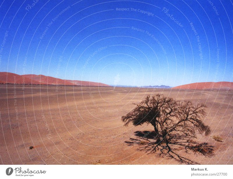 Fernweh Baum rot Ferne Afrika heiß Physik trocken München Namib blau Wüste schweifen Wärme Durst