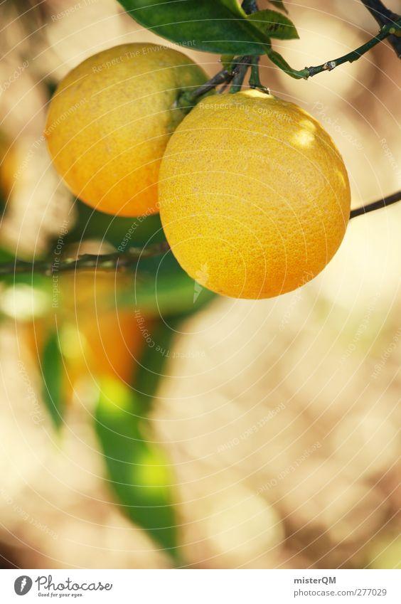 Orange Garden XII Natur Pflanze Sonne Landschaft Umwelt gelb Gesundheit Frucht ästhetisch Bioprodukte ökologisch vitaminreich Tee Obstbaum Zitrusfrüchte