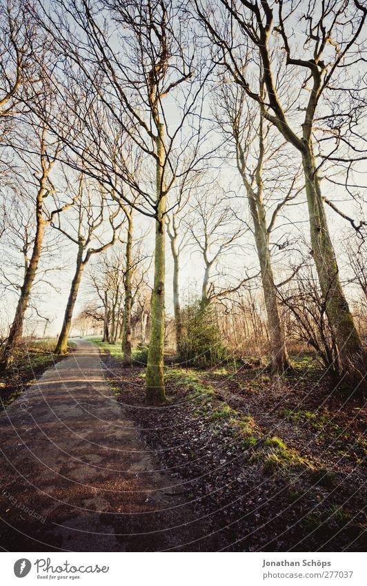 WWWB Umwelt Natur Landschaft Pflanze Frühling Winter Schönes Wetter Baum Wald ästhetisch Gefühle Zufriedenheit Lebensfreude wandern Spaziergang Spazierweg