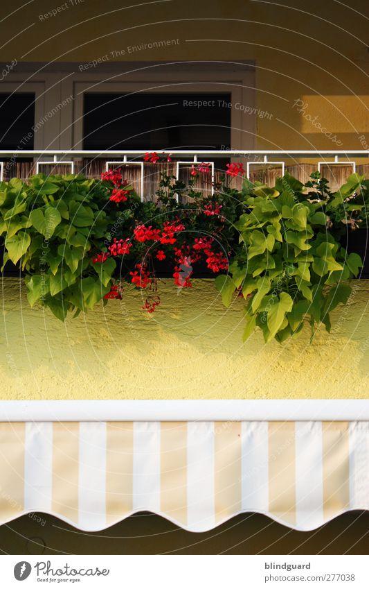 Summer In The City Blume Blatt Blüte Grünpflanze Topfpflanze Haus Mauer Wand Fassade Balkon Tür Dekoration & Verzierung Stein Metall mehrfarbig gelb grün rot