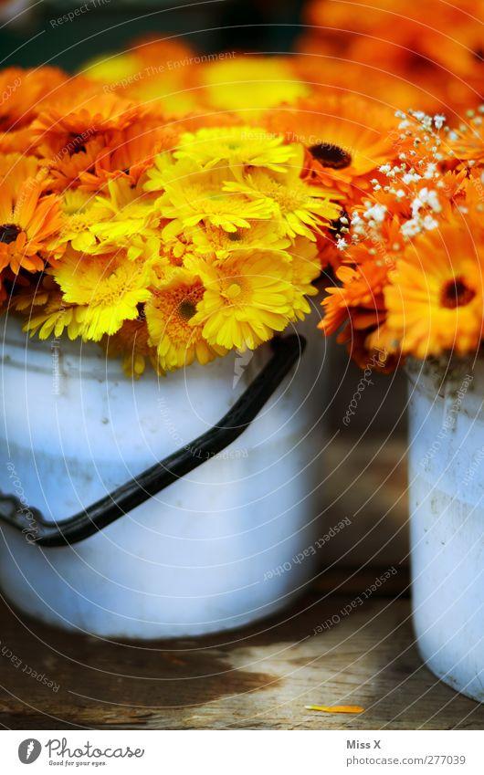 Ringelblumen pro Eimer Pflanze Frühling Sommer Blume Blüte Blühend Duft Blumenstrauß Blumenhändler Blumenladen Kübel orange Farbfoto mehrfarbig Nahaufnahme