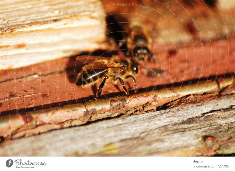 Chating Bees Biene Arbeiter Bienenstock
