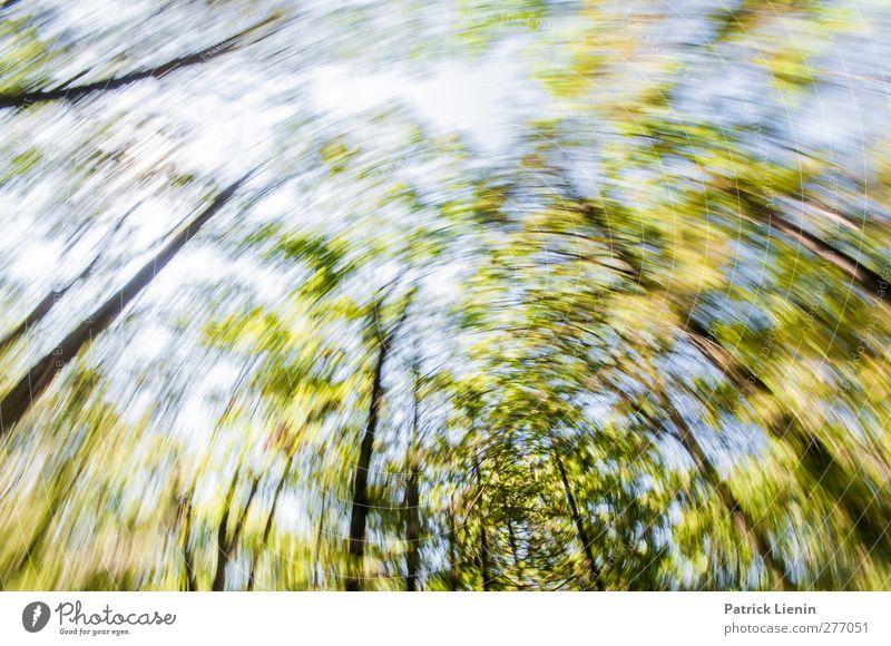 Motion sickness Himmel Natur Ferien & Urlaub & Reisen Sommer Baum Pflanze Einsamkeit Wald Landschaft Umwelt Bewegung Freiheit Stimmung Wetter Klima