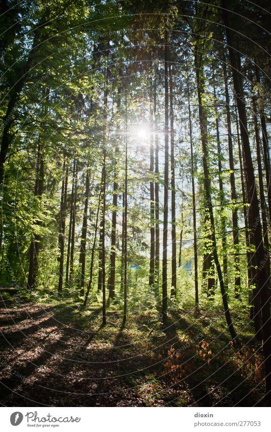 Waldlicht Natur Baum Sommer Pflanze Sonne ruhig Erholung Landschaft Umwelt Frühling Erde Zufriedenheit Klima Ausflug Schönes Wetter