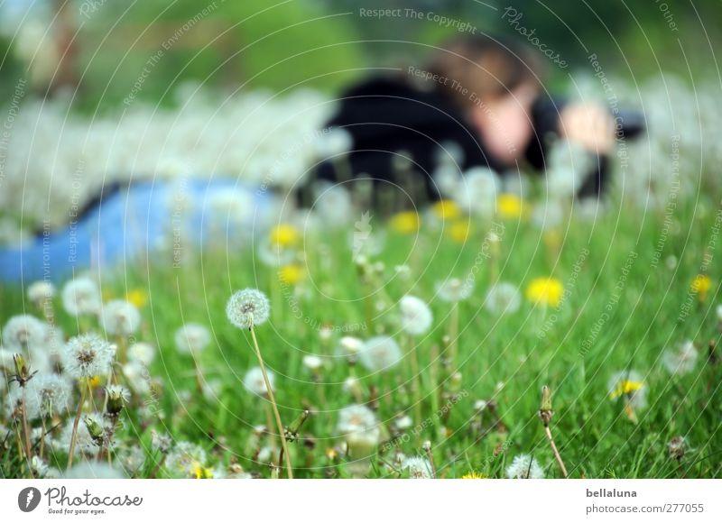 Eine Woche after! Mensch Frau Natur Jugendliche Pflanze Blume Junge Frau Erwachsene Umwelt Wiese Leben feminin Frühling Garten liegen Park