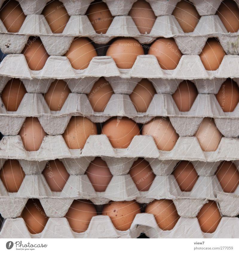 Eier haben Lebensmittel Ordnung authentisch Ernährung kaufen Kochen & Garen & Backen einfach Güterverkehr & Logistik Bauernhof Gastronomie Ei Bioprodukte verkaufen Haushuhn zerbrechlich Vorrat