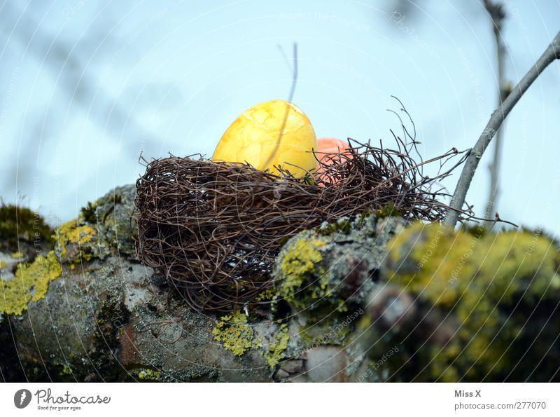 gelbes Ei Lebensmittel Ostern Frühling Baum Osterei Osternest Nest Horst Ast Zweig Baumstamm verstecken Versteck Farbfoto mehrfarbig Außenaufnahme Nahaufnahme
