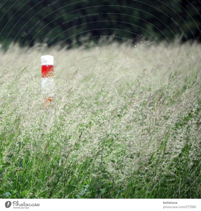 Mit dem Winde verweht. Natur weiß grün Sommer rot Pflanze Umwelt Wiese Gras Frühling Garten Park Feld Säule Pfosten Wildpflanze