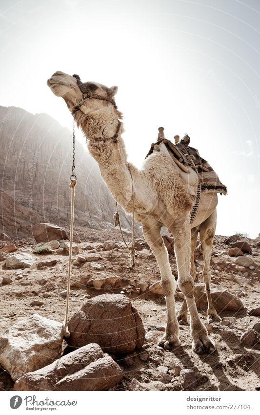 Schönheitsideal Ferien & Urlaub & Reisen schön Sommer Tier Ferne Arbeit & Erwerbstätigkeit warten Tourismus stehen Abenteuer ästhetisch Güterverkehr & Logistik