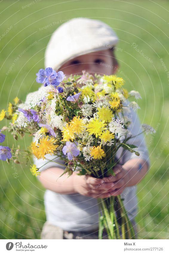für Mami Mensch maskulin Kind Kleinkind Kindheit 1 1-3 Jahre Pflanze Frühling Sommer Schönes Wetter Blume Blüte Wiese Blühend Duft Fröhlichkeit klein niedlich
